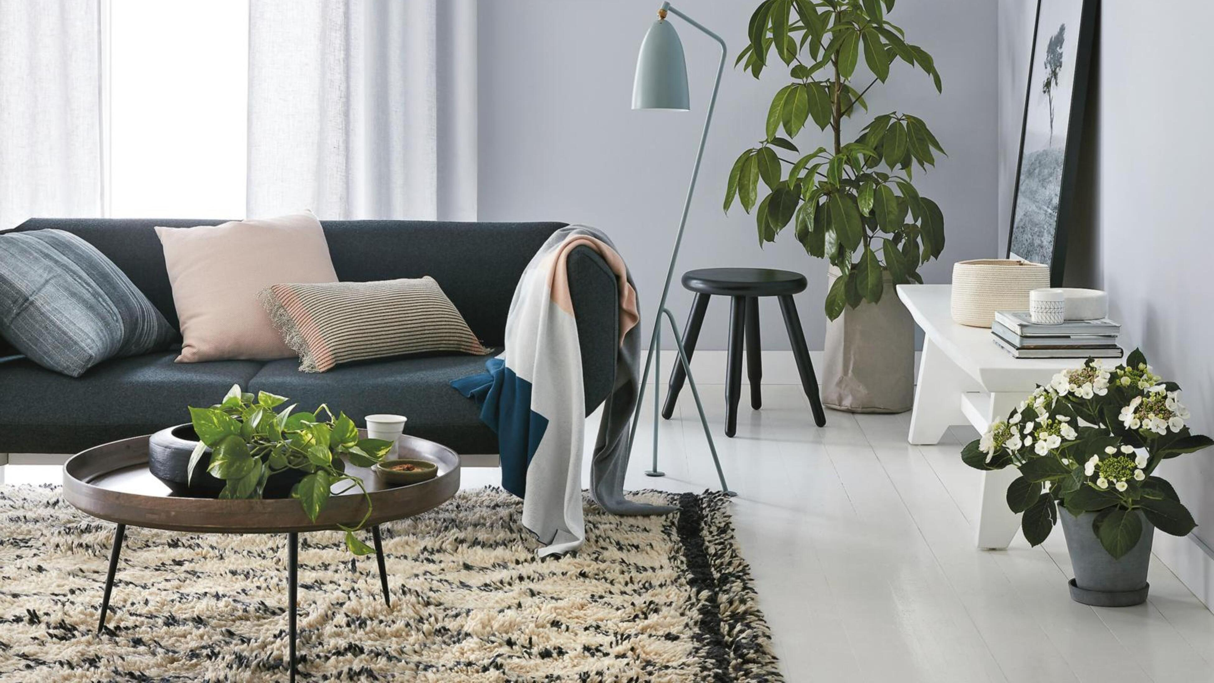 Sofa, coffee table and plants, in room with grey walls.
