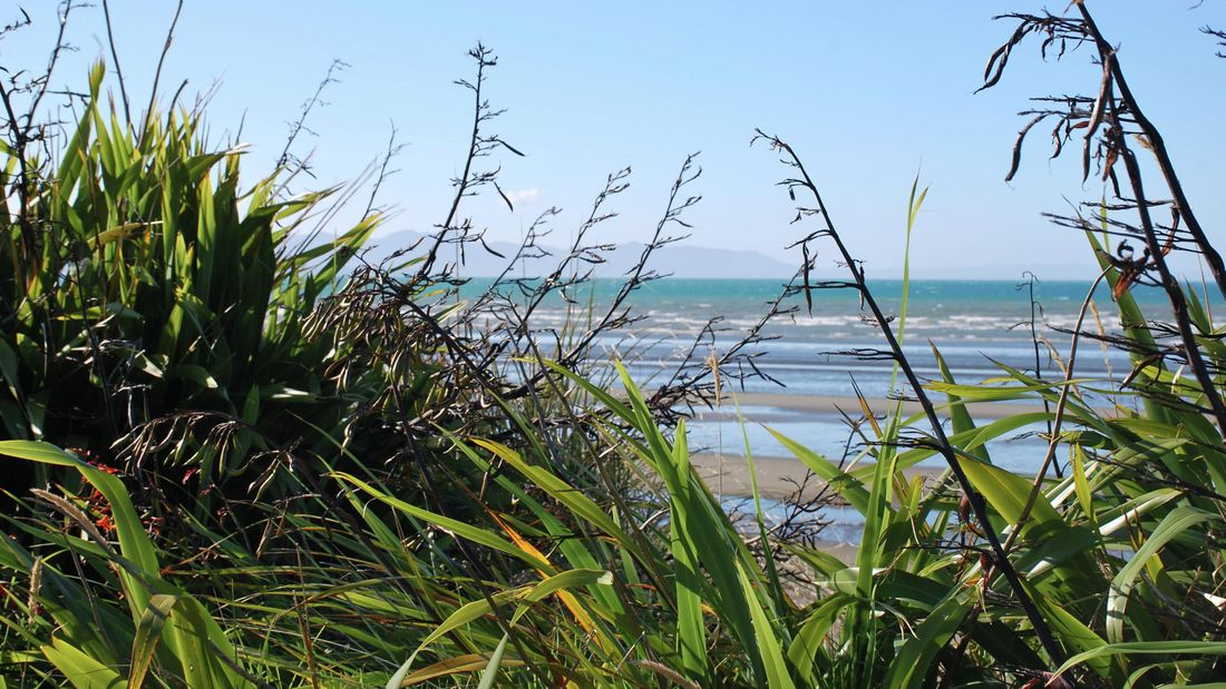 wide angle of a flax plant near the beach