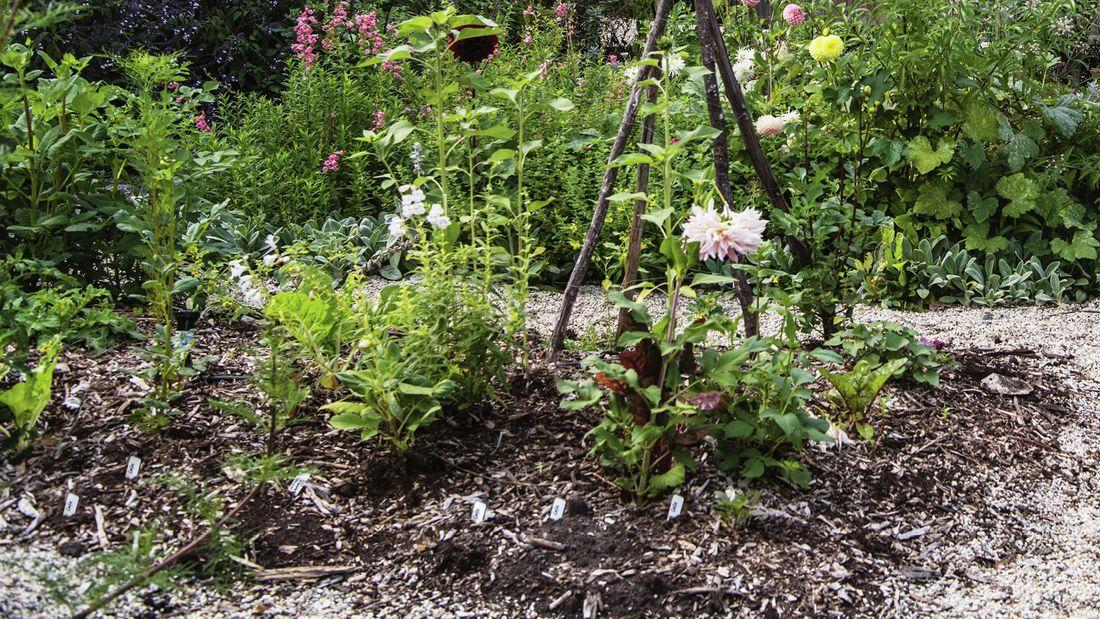 Vegetables growing in a garden.