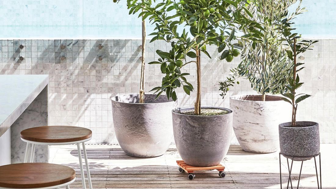 A variety of potted plants in situ