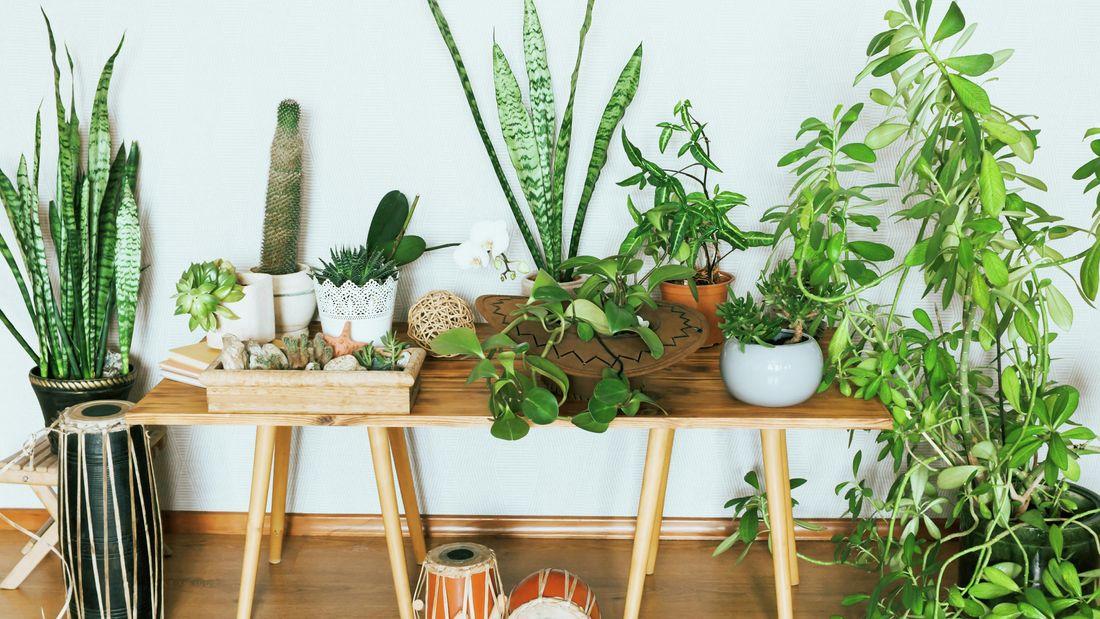 Various indoor plants.