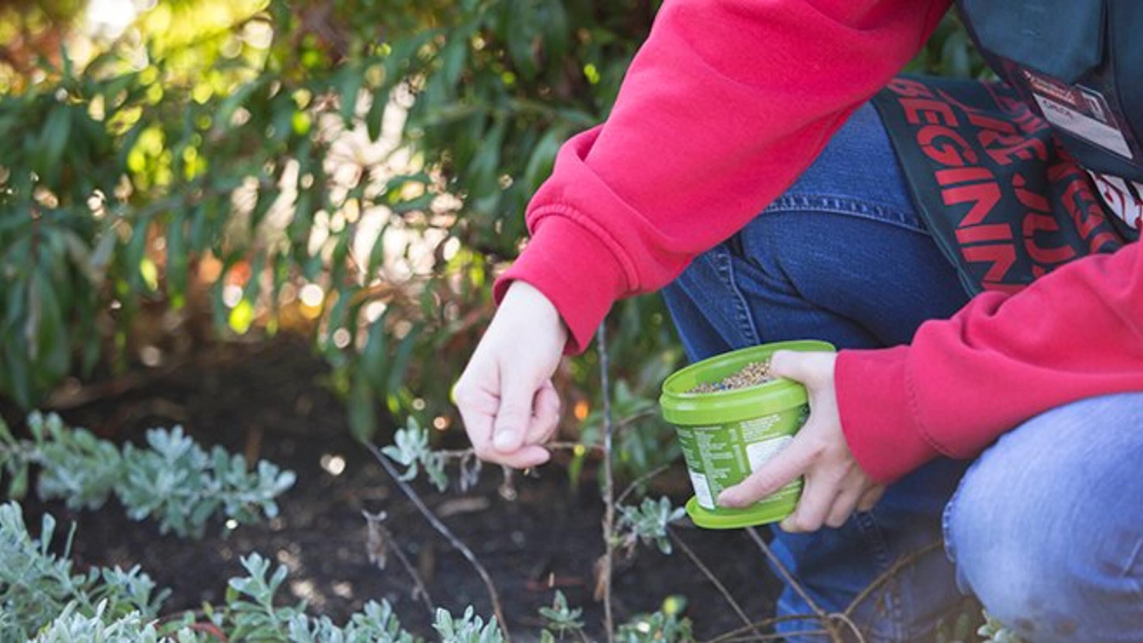 Person fertilising garden.