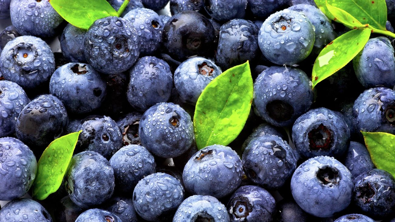 Close up of harvested blueberries