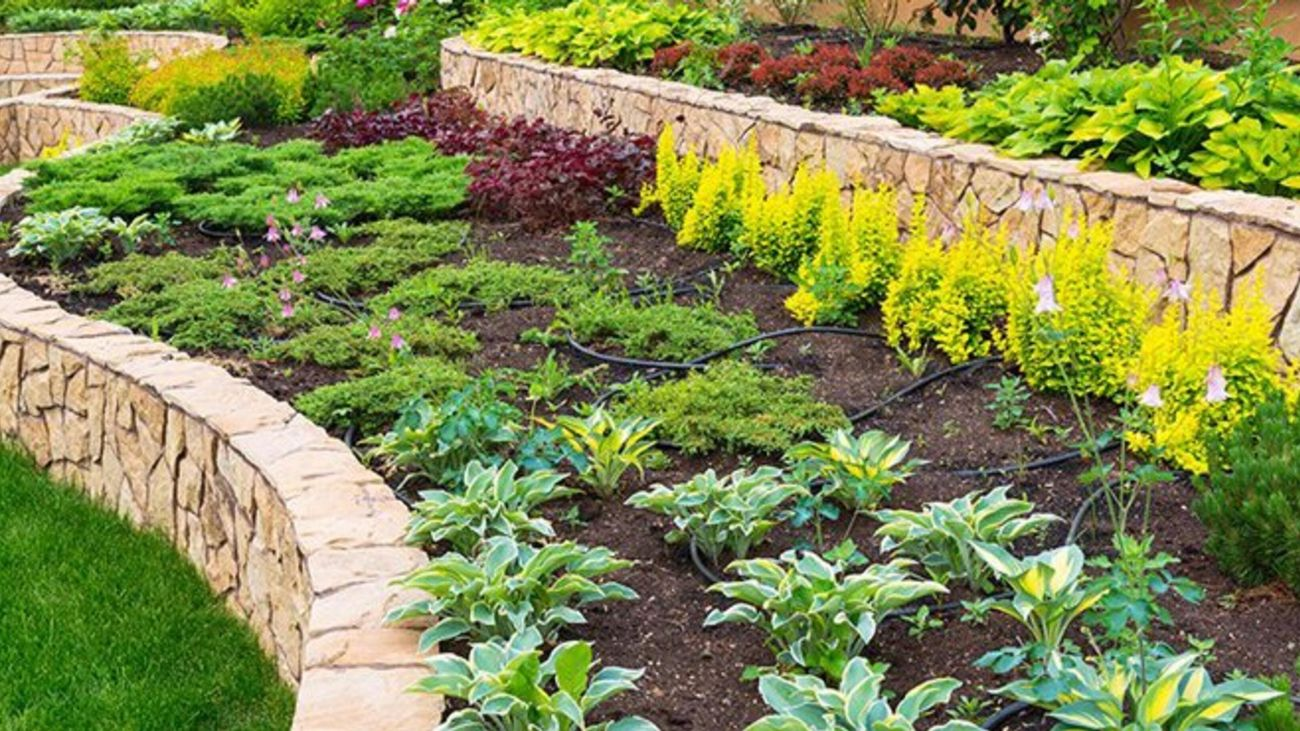 Tiered garden area with variety of plants and flowers.