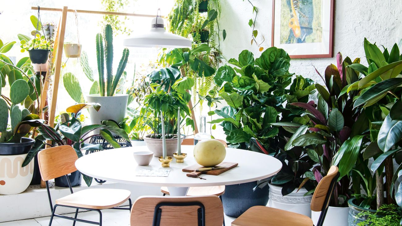 Dining room surrounded by a selection of indoor plants