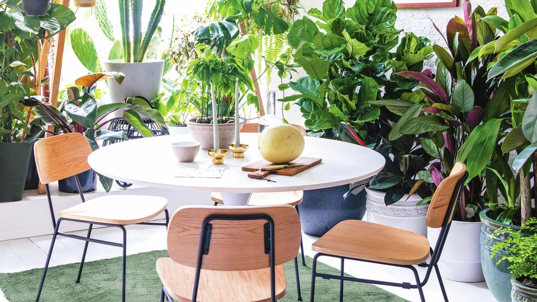 An indoor table and three chairs surrounded by indoor plants.