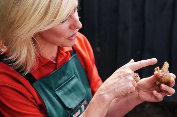 A woman pointing at the pointy end of a flower bulb