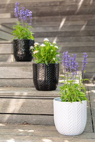Various potted plants on wooden steps