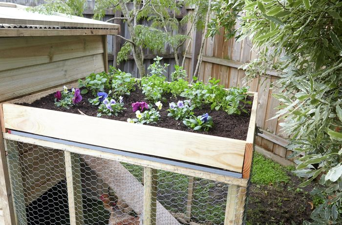 A homemade chicken coop containing a number of chickens, with a planter box on the roof