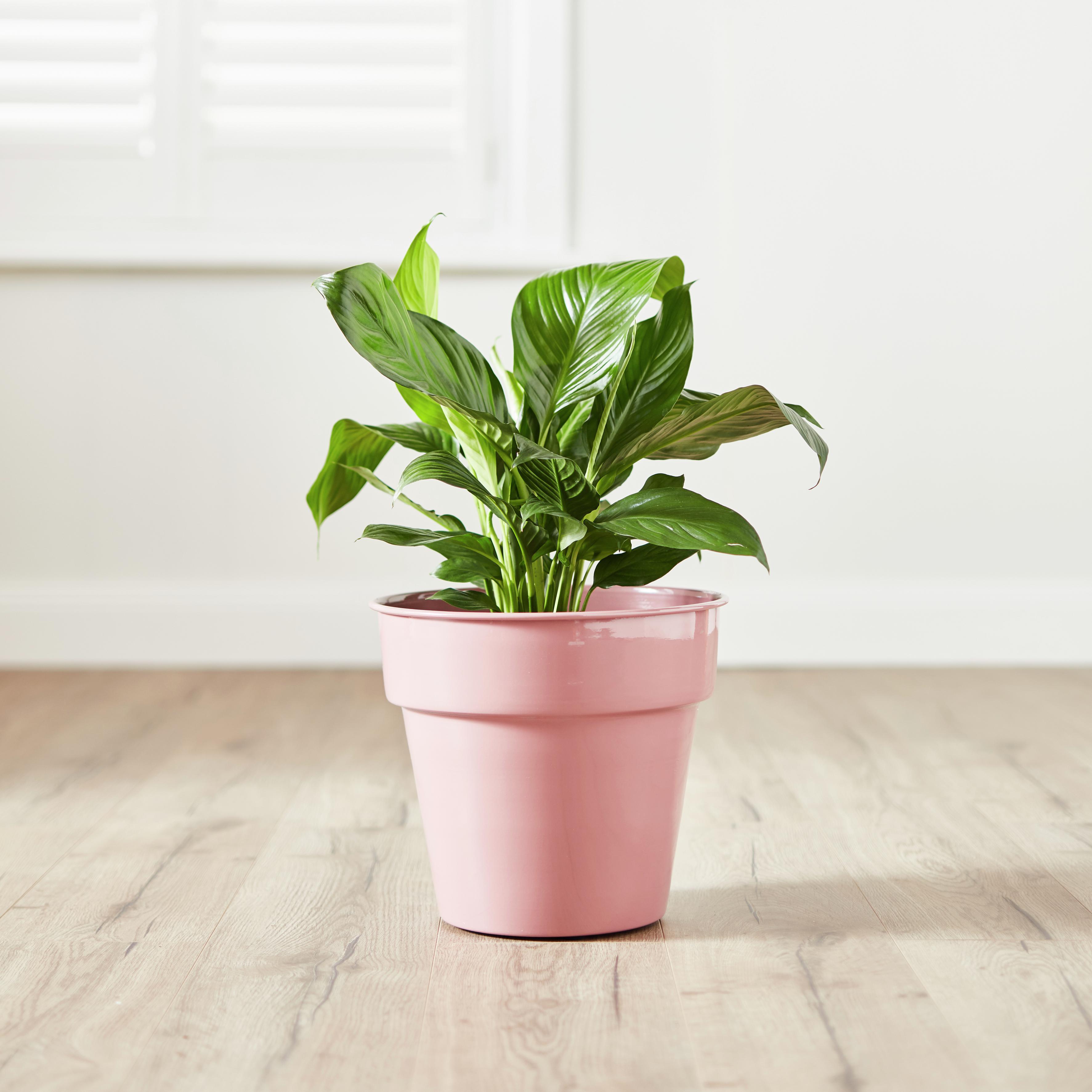 Best Low Light Indoor Plants   Bunnings Australia