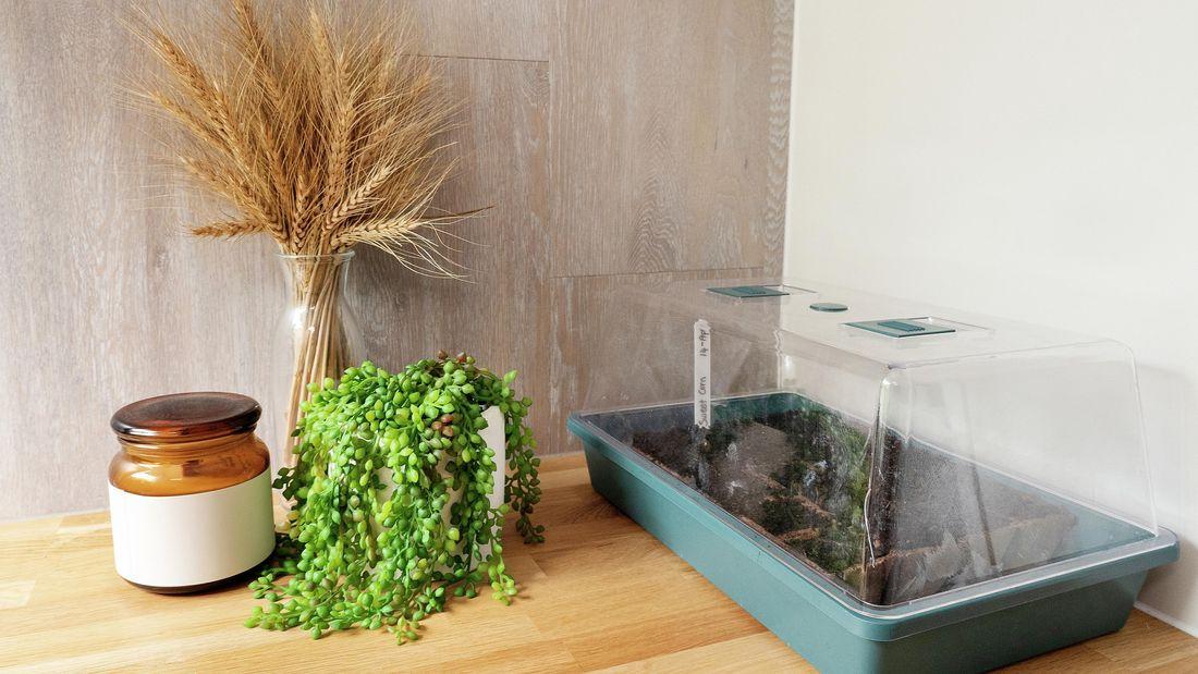 DIY Advice Image - How to plant seeds. G Drive blob storage upload.
