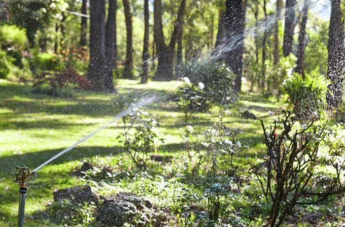 Sprinkler spraying lots of water in green outdoor environment.