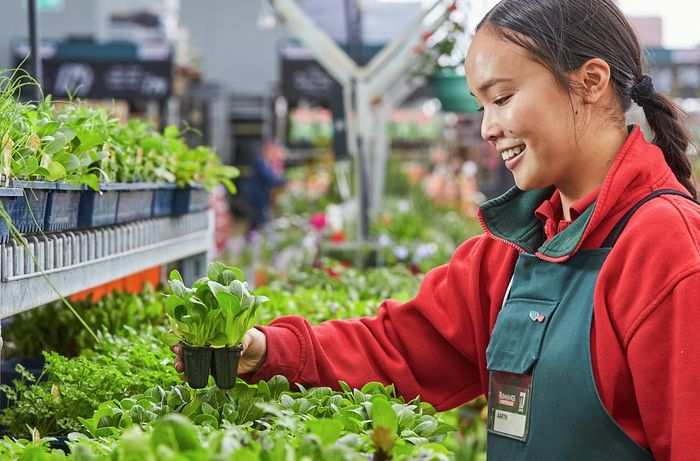 team member in nursery holding plant seedling