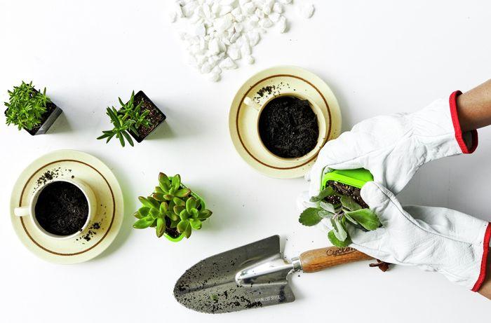 DIY Advice Image - How to make a teacup garden . G Drive blob storage upload.