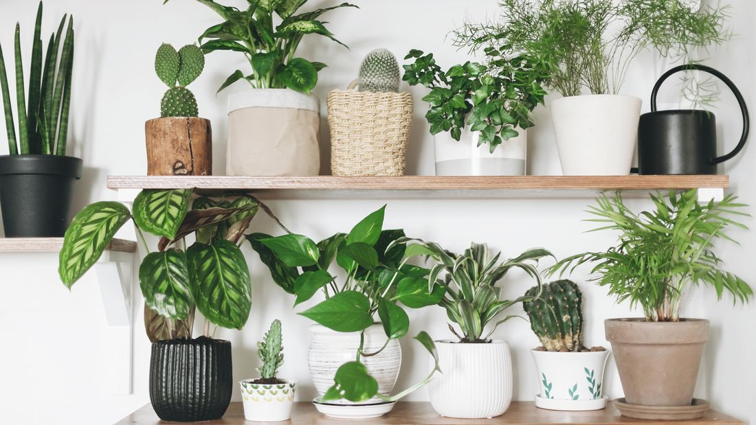 Pot plants on shelves.