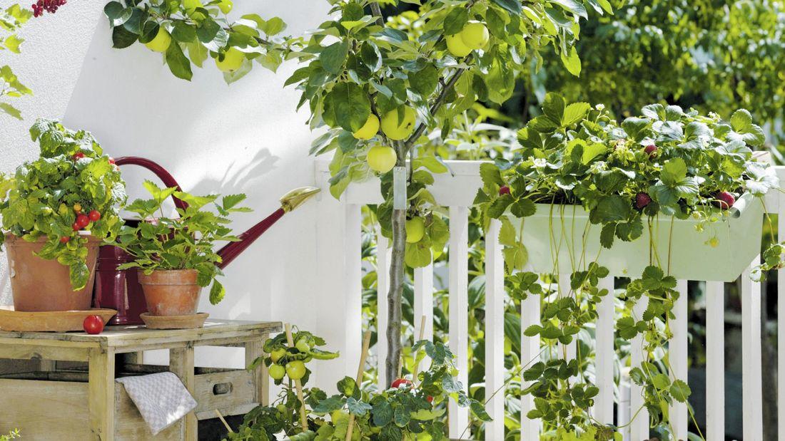 Fruit trees on deck area