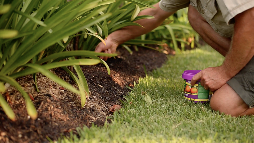 Person spreading plant food in a garden