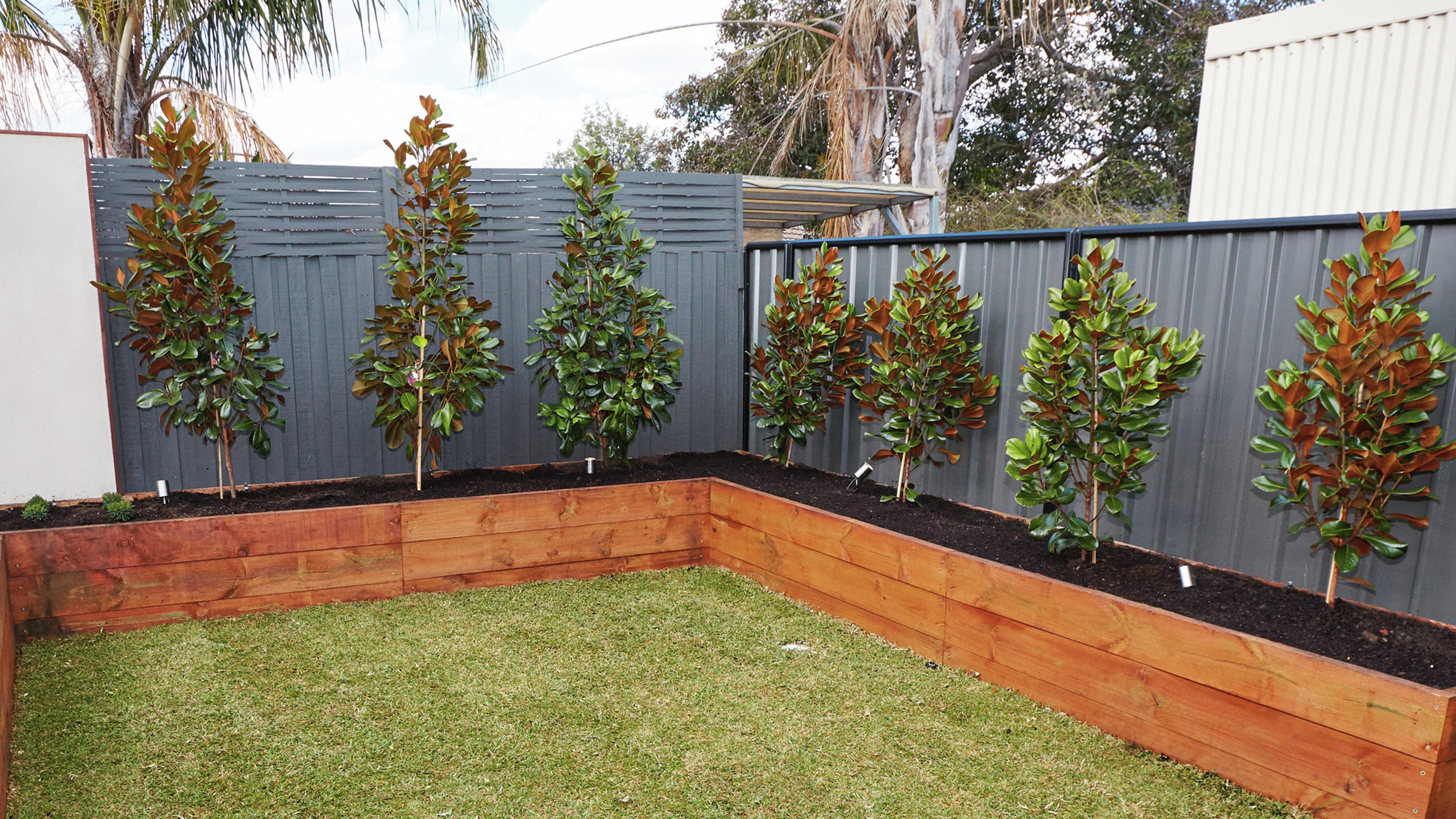 Trees growing in raised garden beds.
