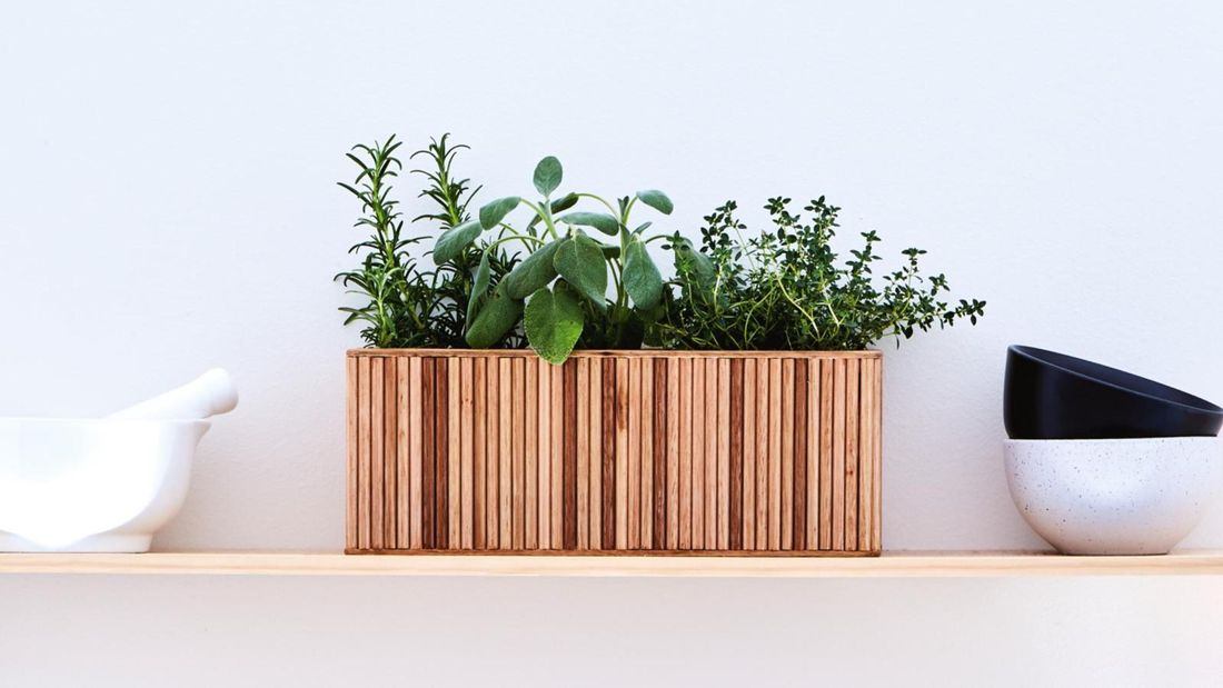 Planter with micro herbs sitting on floating wall shelf.