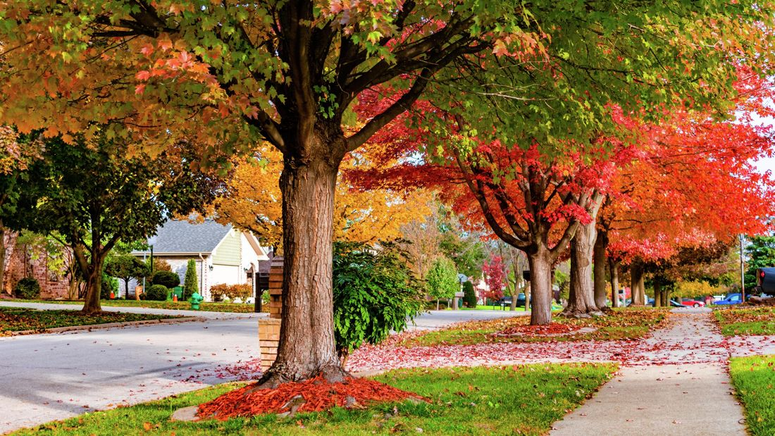 A row of trees with colourful autumn leaves