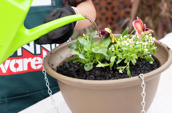 Bunnings Team Member using a watering can to water flowers in large pot