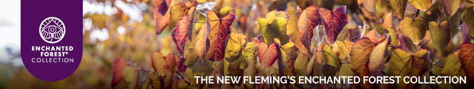 The new Fleming's enchanted forest collection is here.