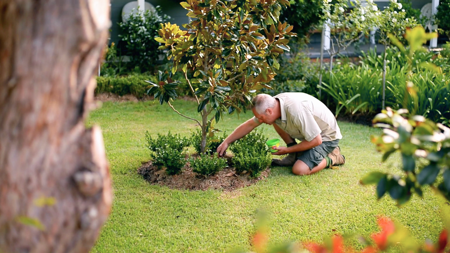 Man sprinkling plant food at the base of a tree in a garden