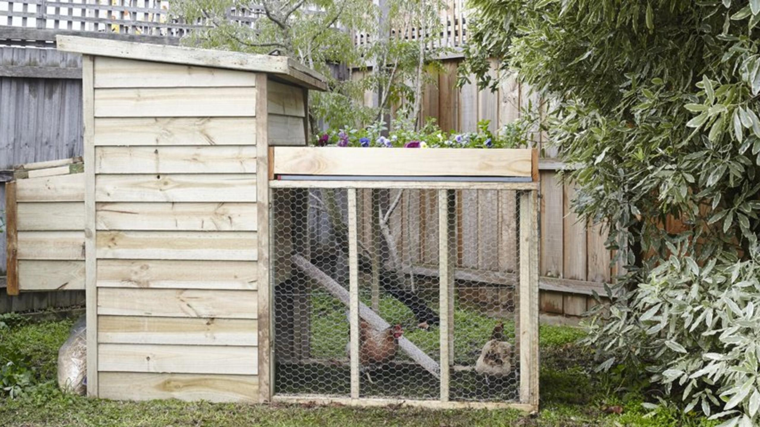 Large homemade chicken coop.