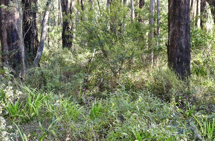 Bushland with thick undergrowth