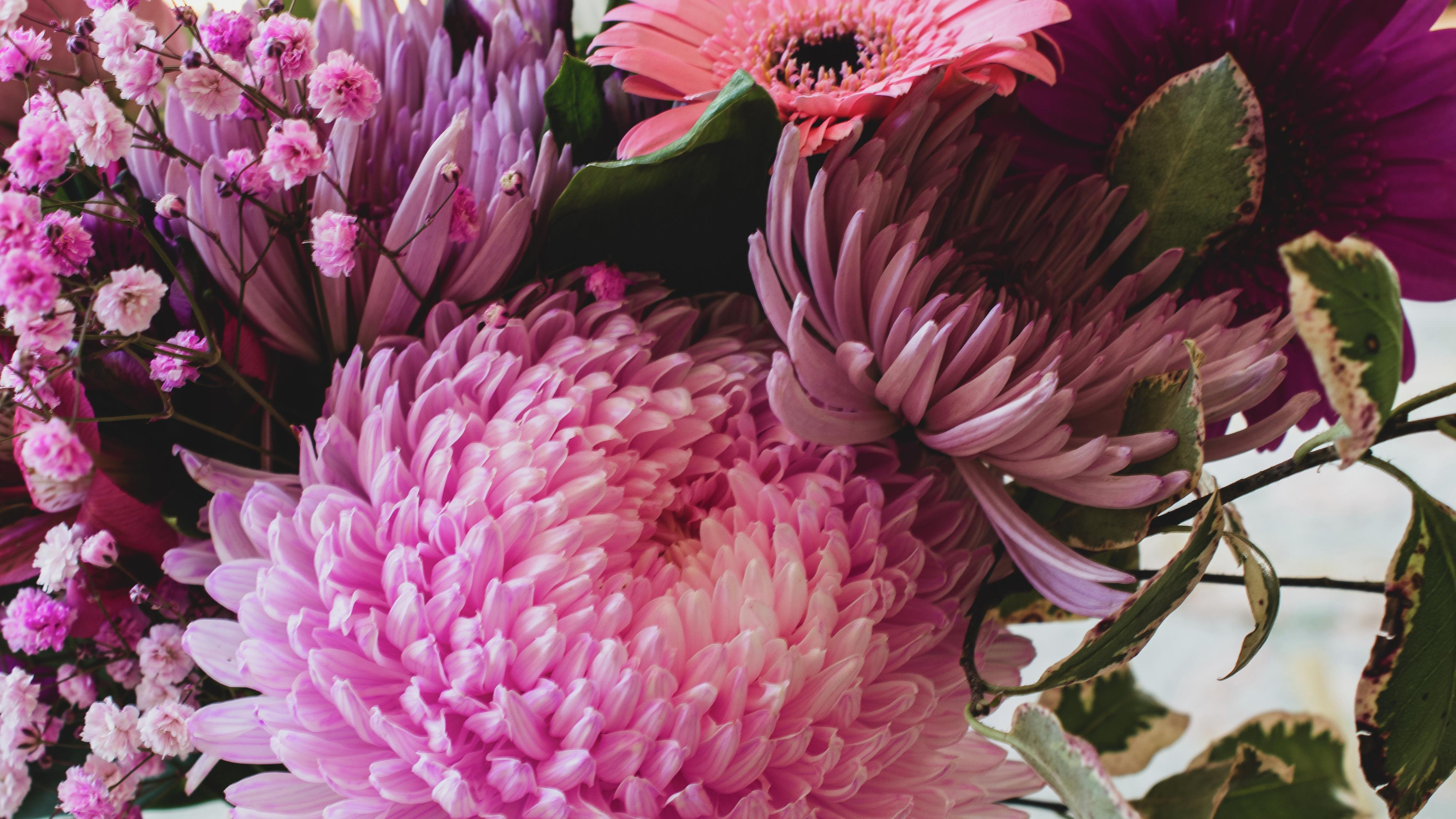 Close up of a stunning pink dahlia flower