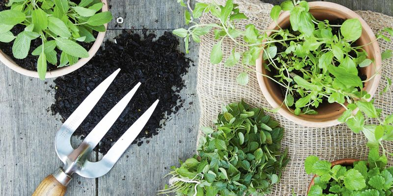 Birds eye view of pot plants and herbs with a spade in view