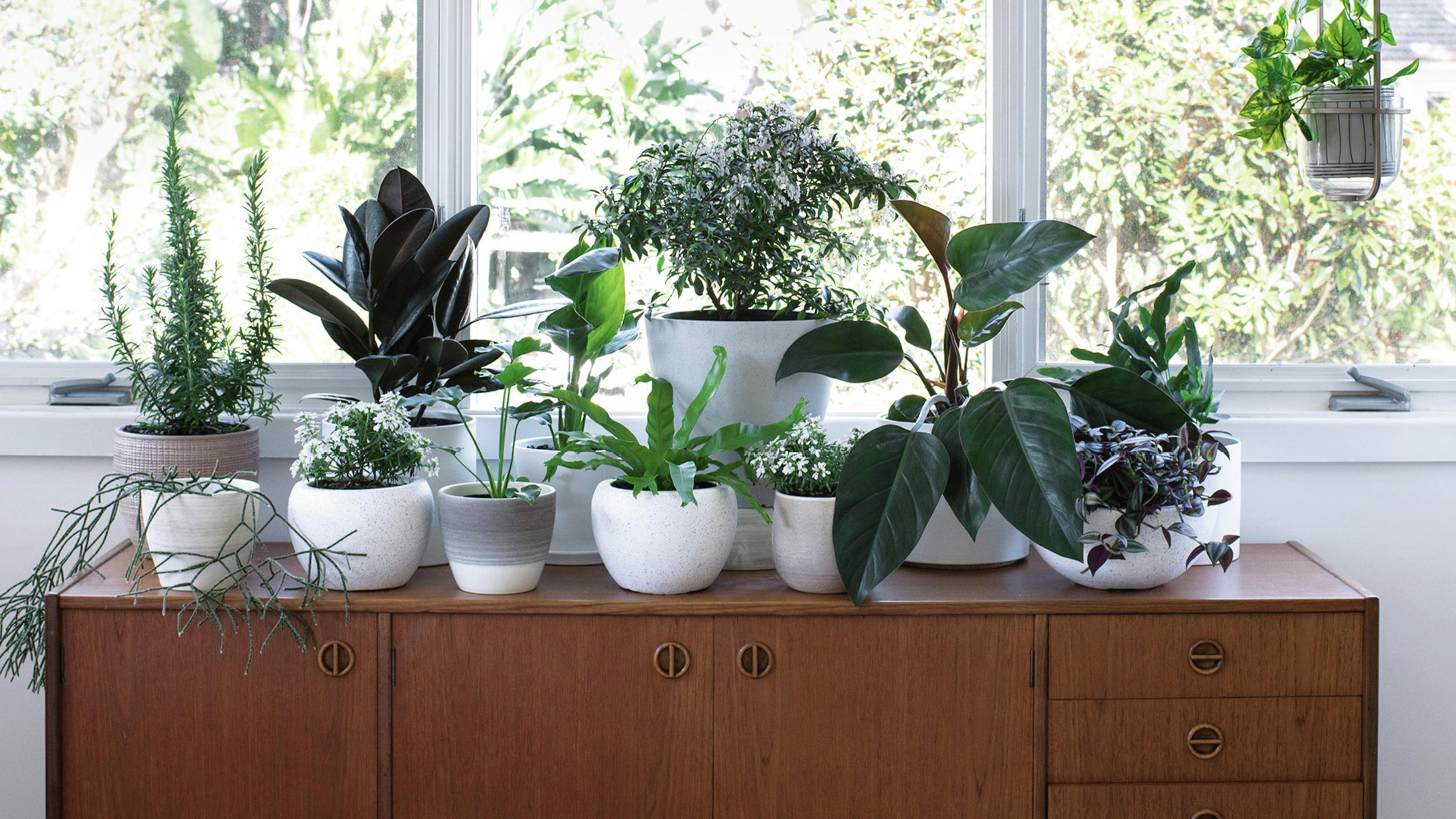 Potted plants sitting on cabinet.