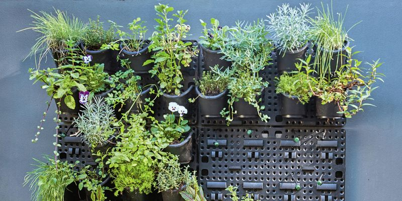 Vertical garden filled with plants against a dark grey concrete wall