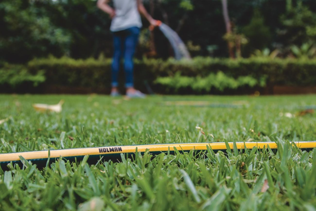 Hose lying on grass while person waters garden in background