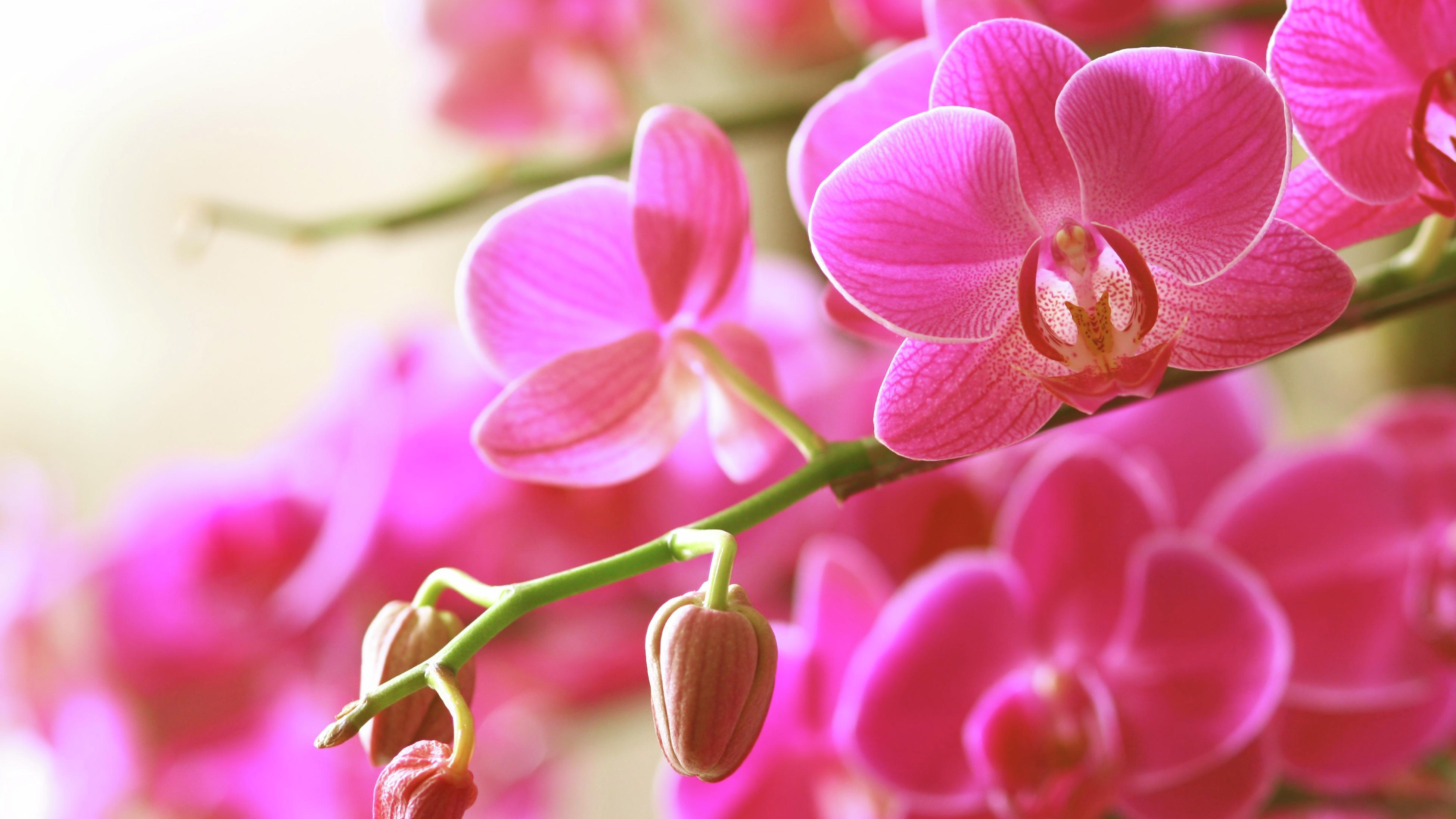 Wild orchids.