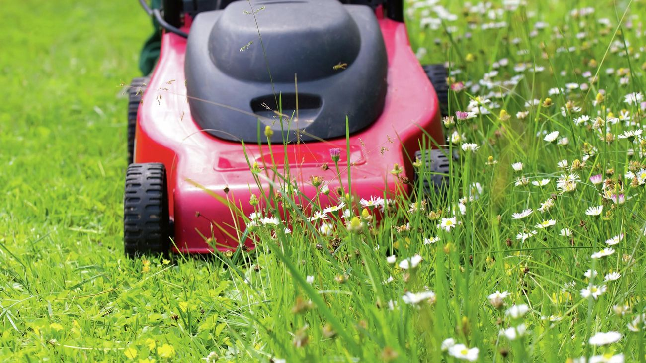 A lawn mower cutting long grass with small flowers