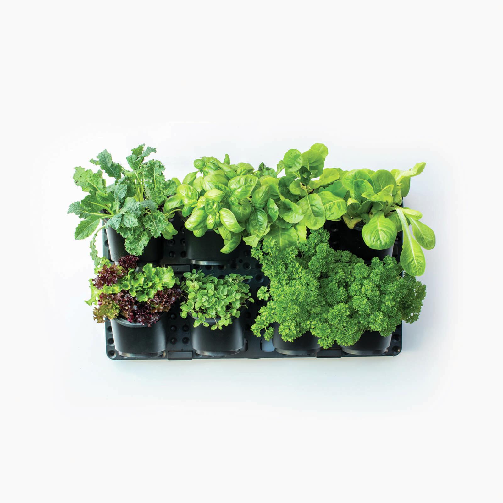 Holman Vertical GreenWall Garden Kit