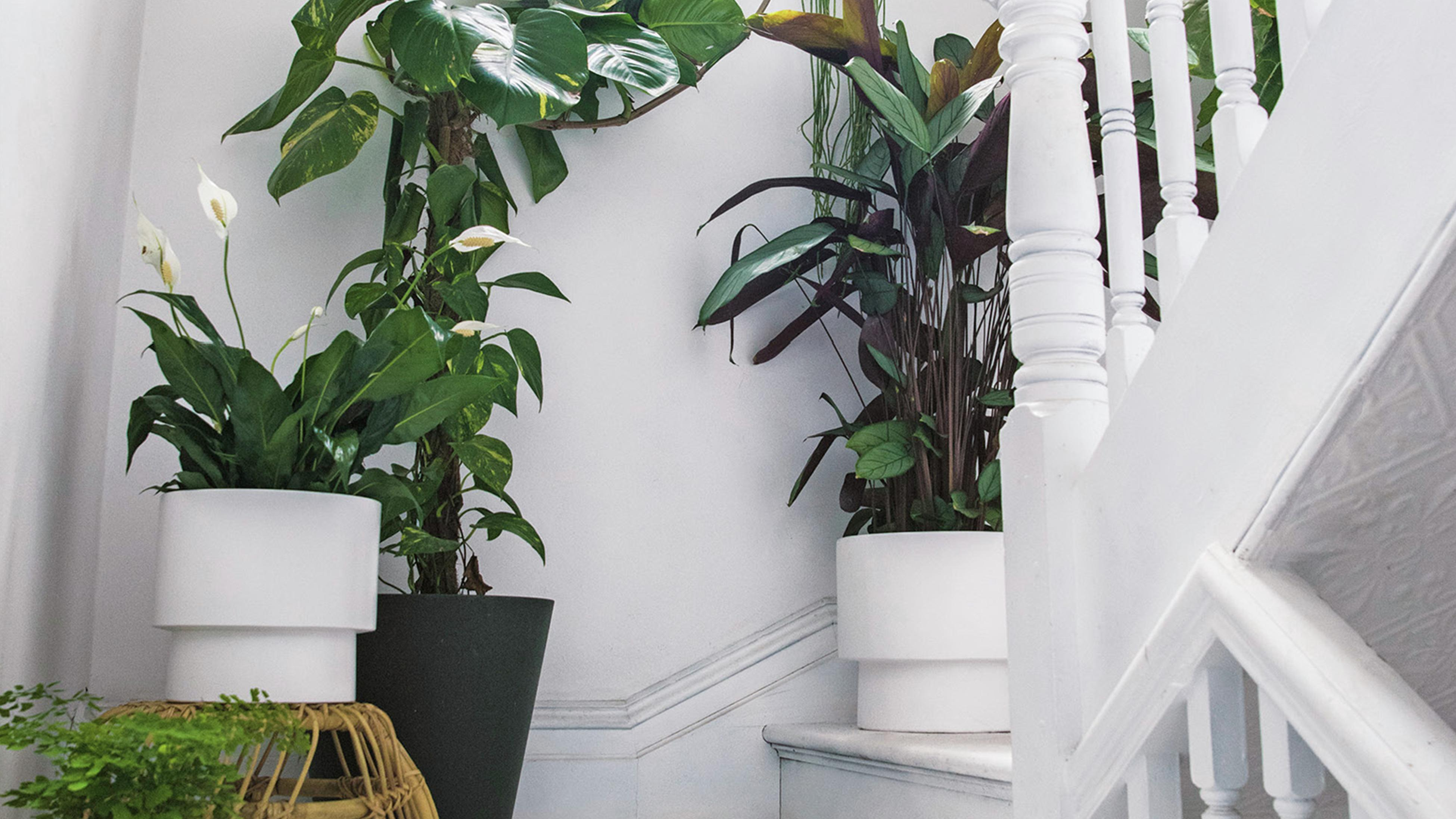 Potted indoor plants on a white staircase