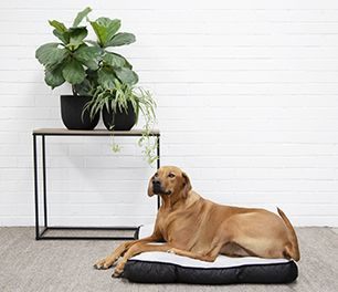 Big dog resting on their big dog bed