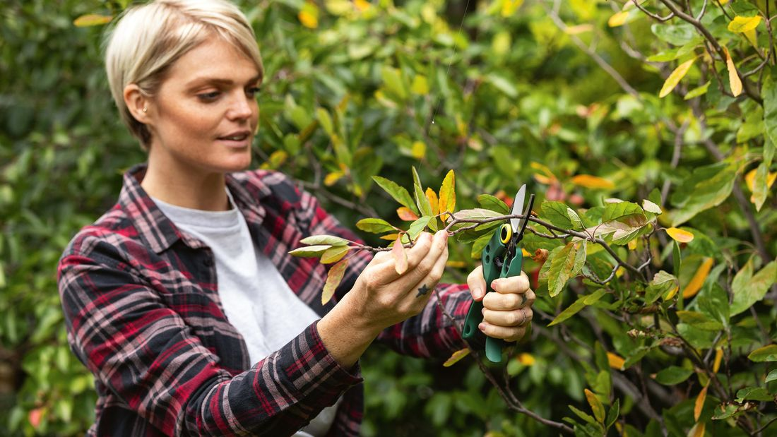A person pruning a tree with a hand pruner