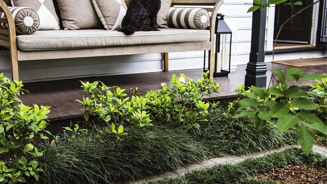 Dog on an outdoor lounge looking out over a garden with pavers and grass