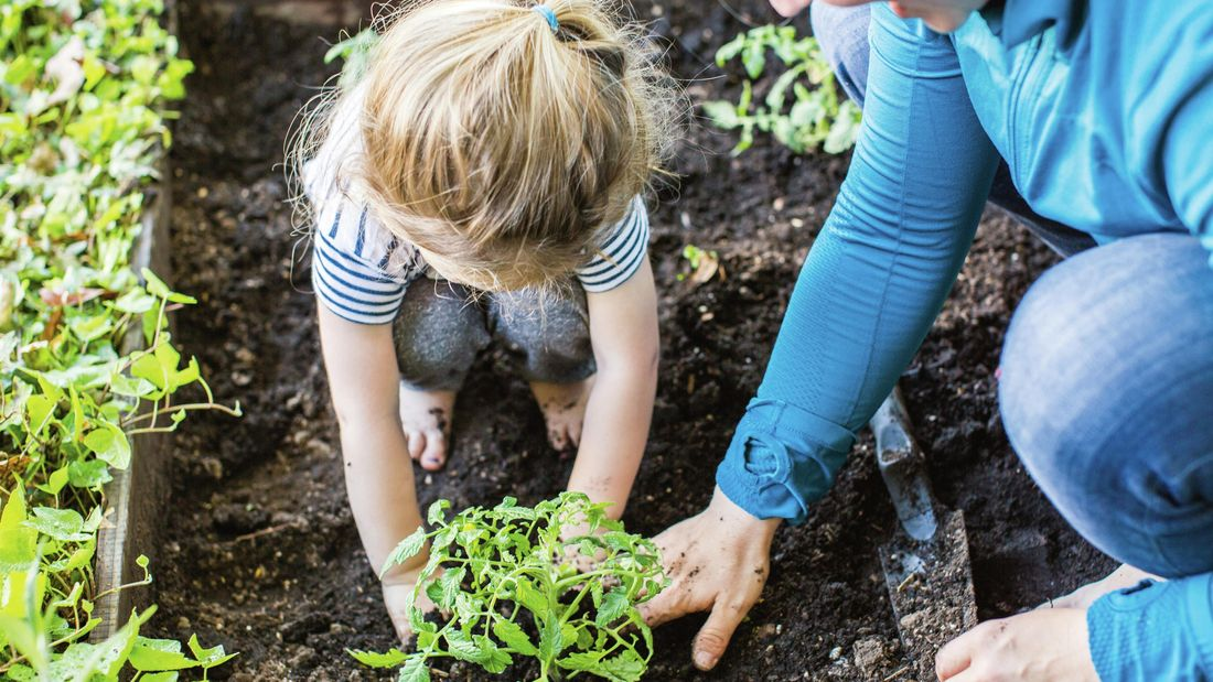 Mother and daughter plant something into the soil.