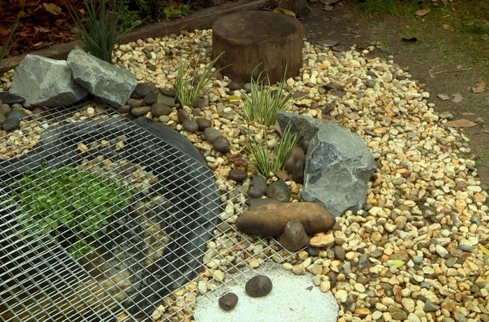 Frog pond with a mesh cover on top.