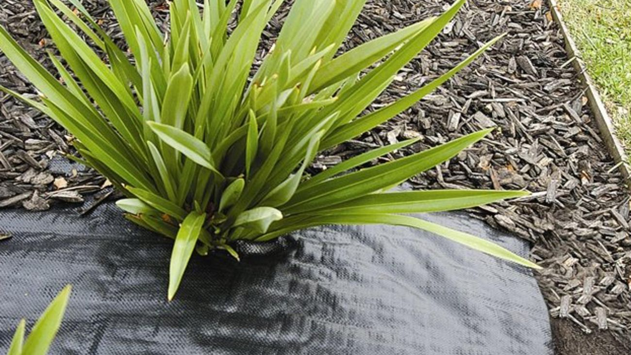 Palm style plant with weedmat and mulch underneath it.