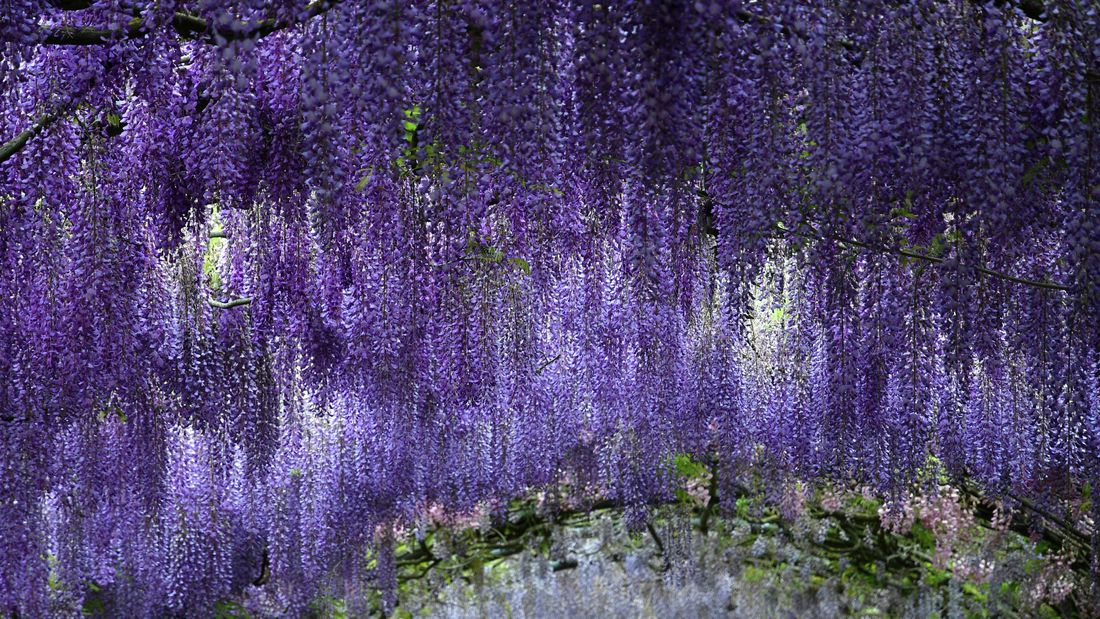 DIY Advice Image - Growing and planting wisteria. G Drive blob storage upload.