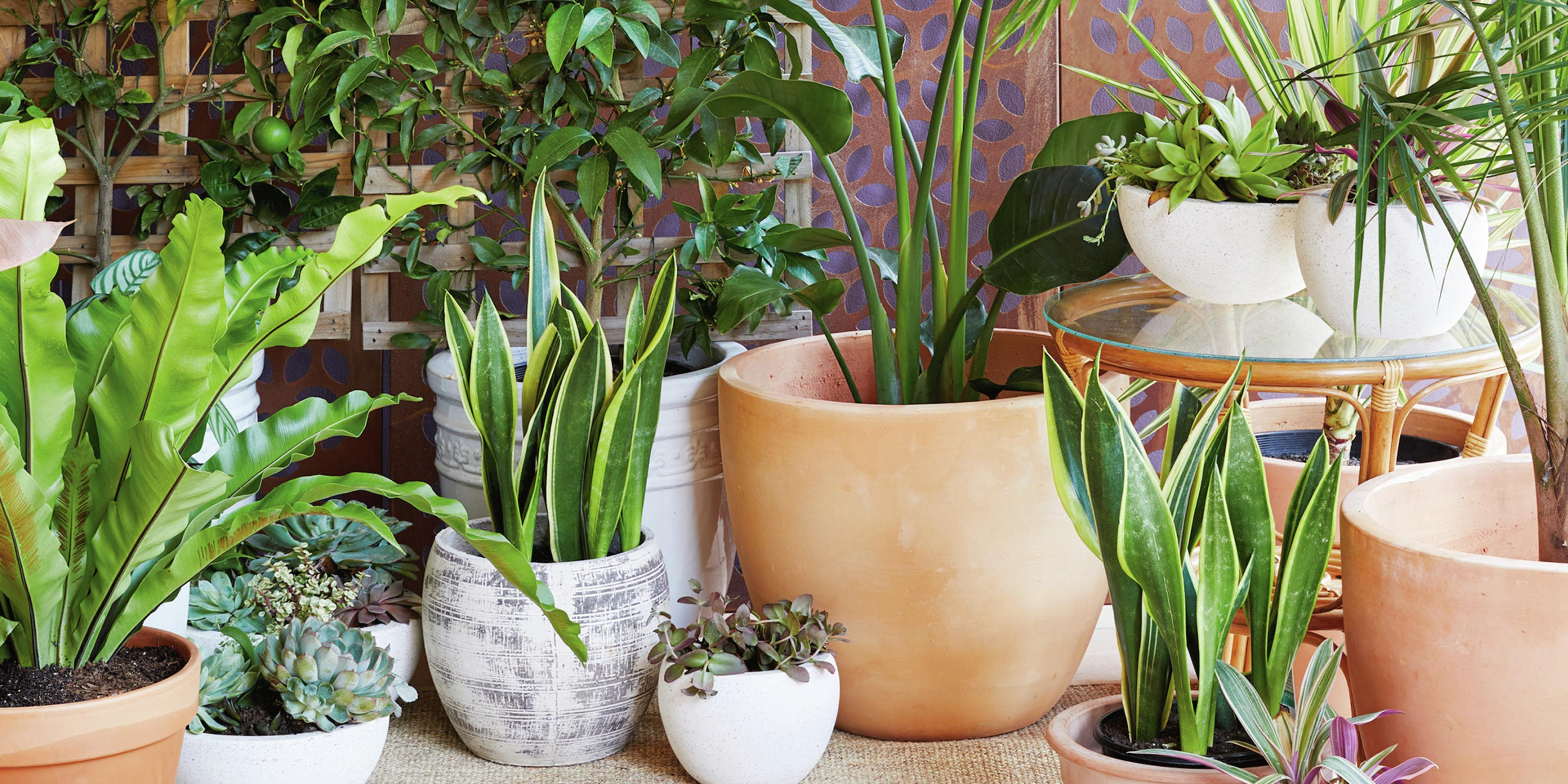 Various potted plants in a tiled backyard