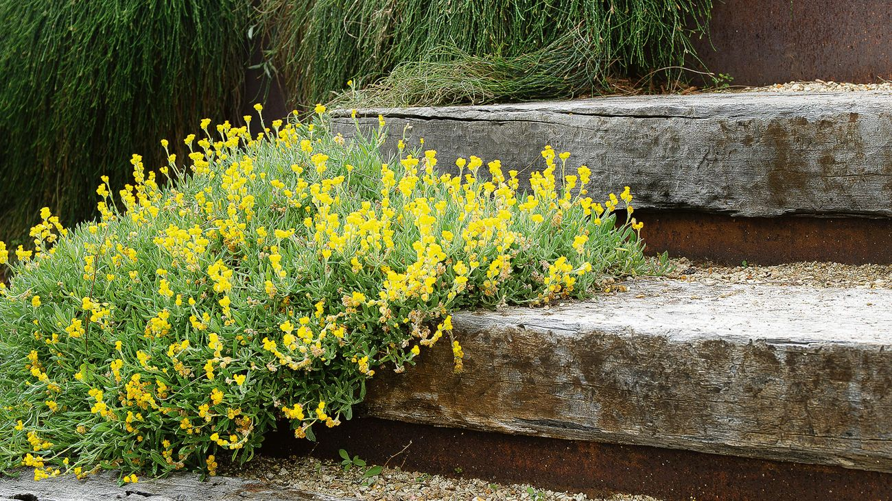 A plant with yellow flowers growing along a timber outdoor staircase