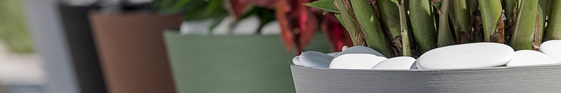 Close-up of plant in a Respect pot