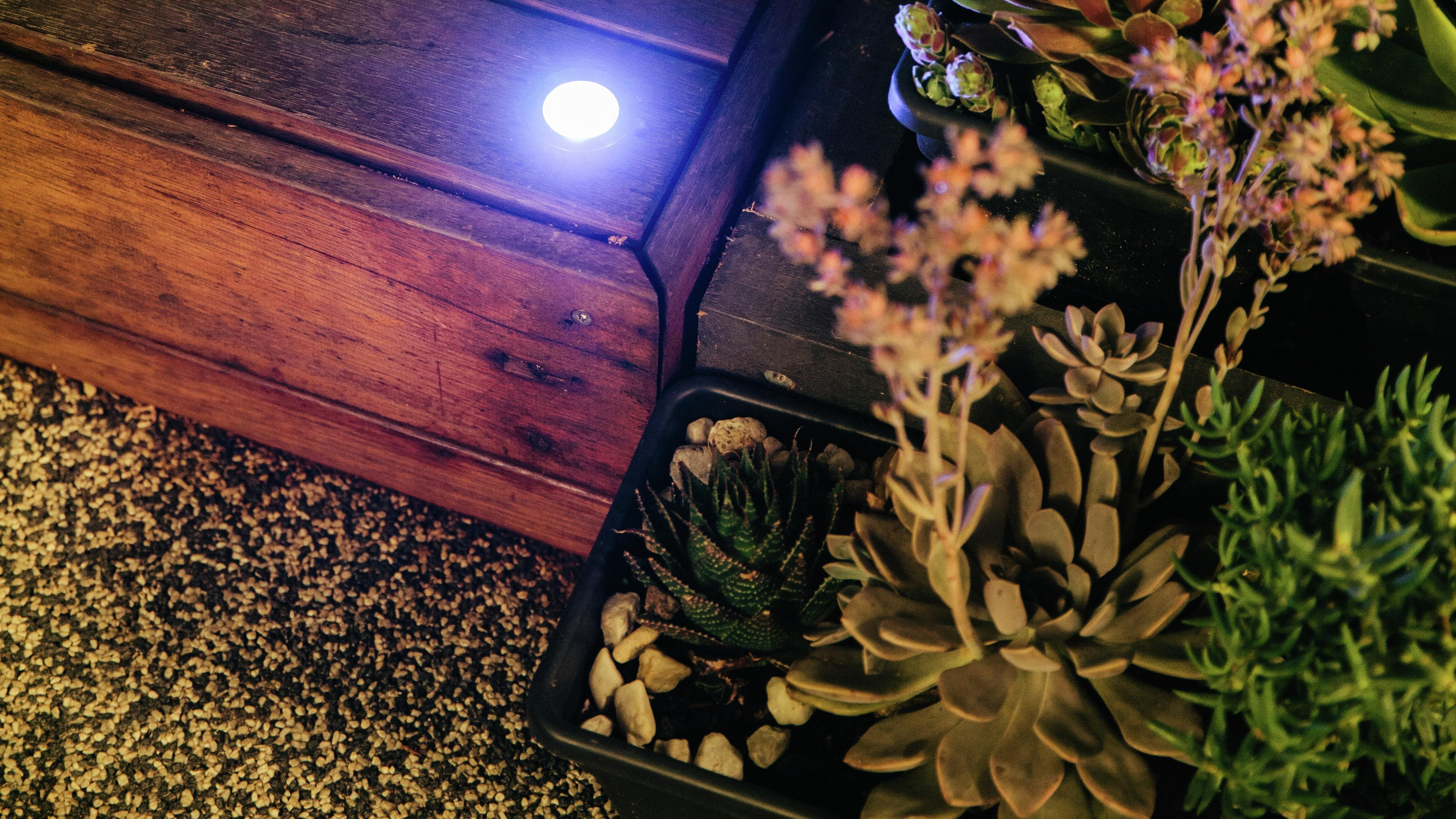 Deck with deck light and succulents.