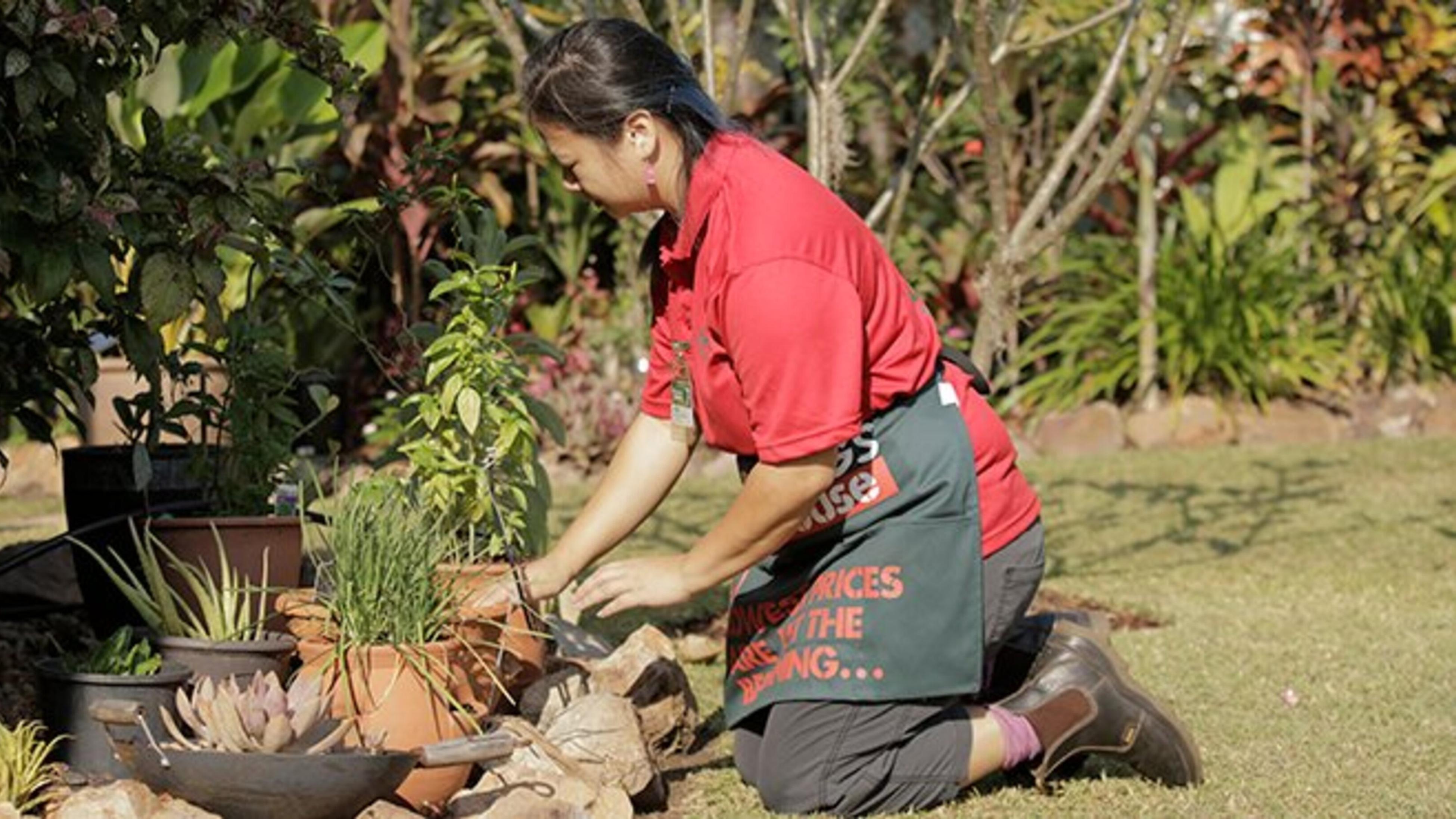 A Bunnings team member harvesting from the garden